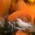 :iconzenox-furry-man: