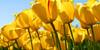 :iconzombie-plant-rep: